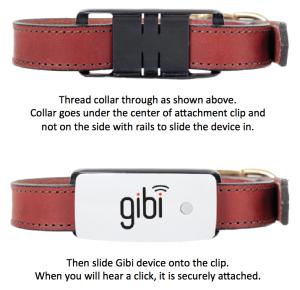 Attach Gibi to Collar